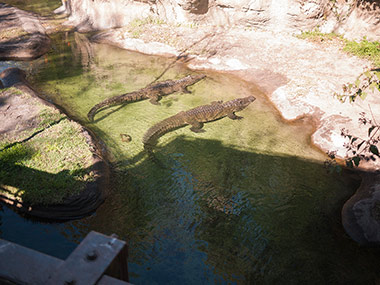 020413_gators.jpg