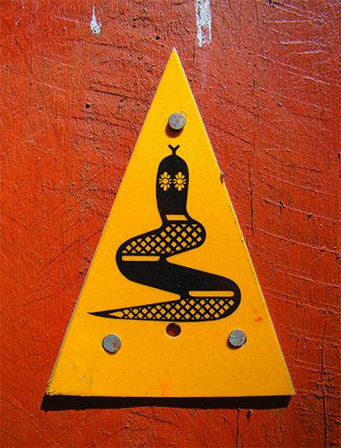 082615_outback_snake.jpg