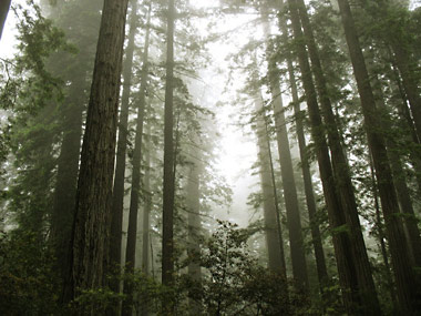 more-trees.jpg
